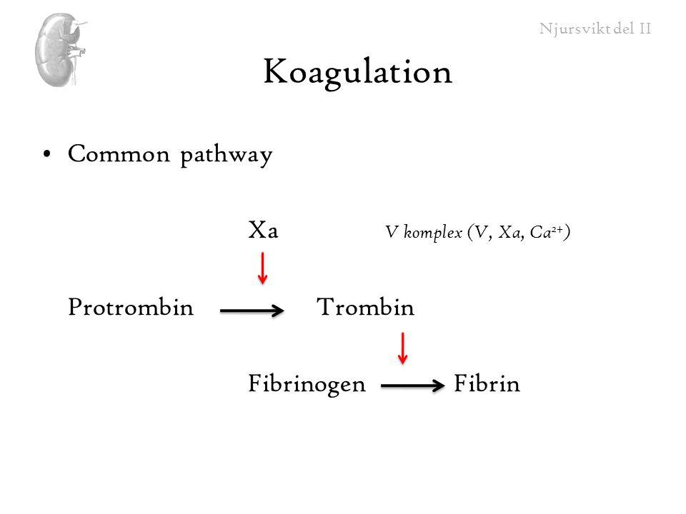 Koagulation Common pathway Xa V komplex (V, Xa, Ca2+)