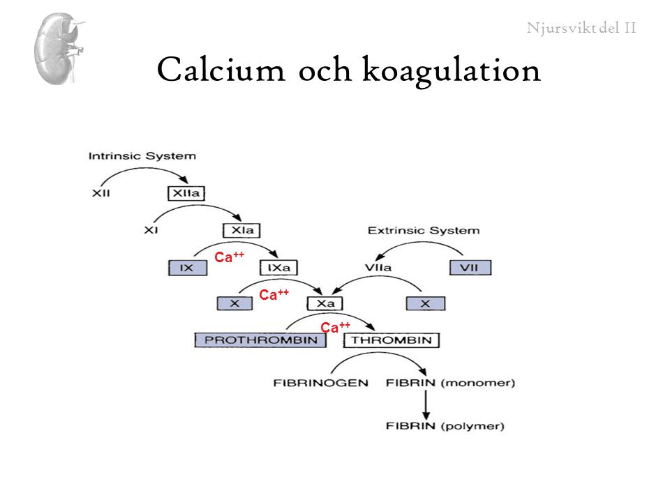 Calcium och koagulation