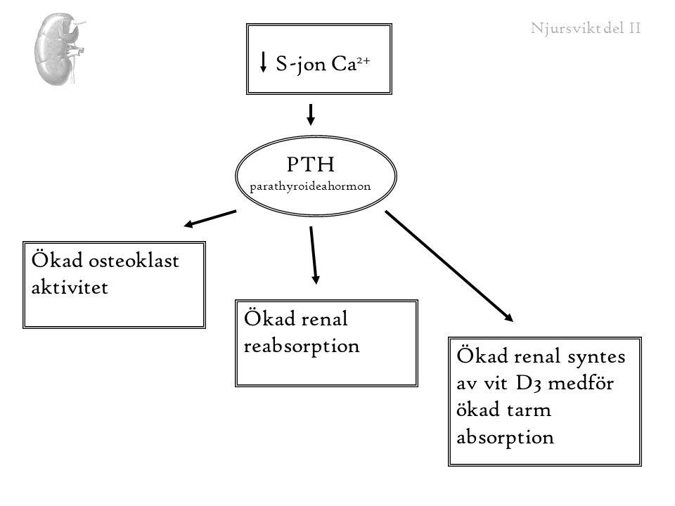 PTH parathyroideahormon