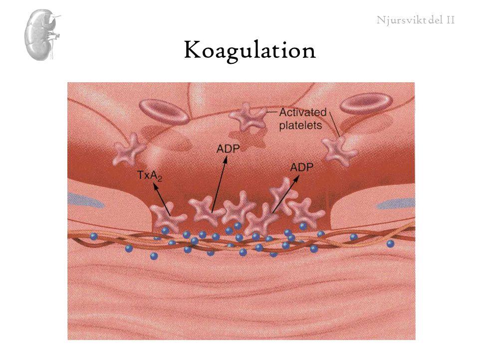 Koagulation