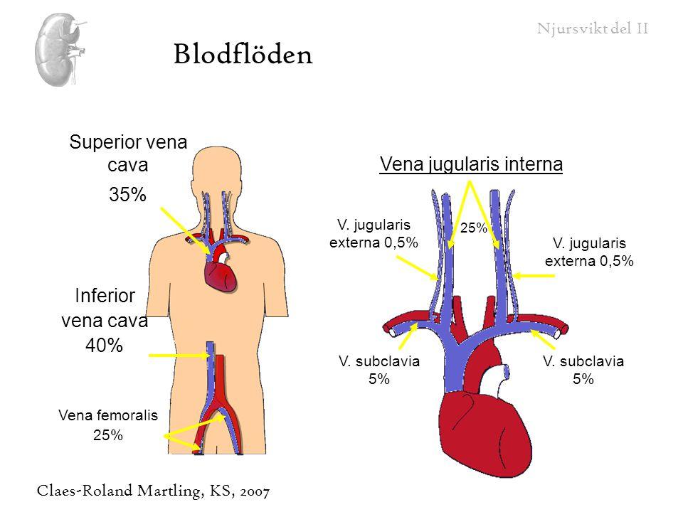 Vena jugularis interna