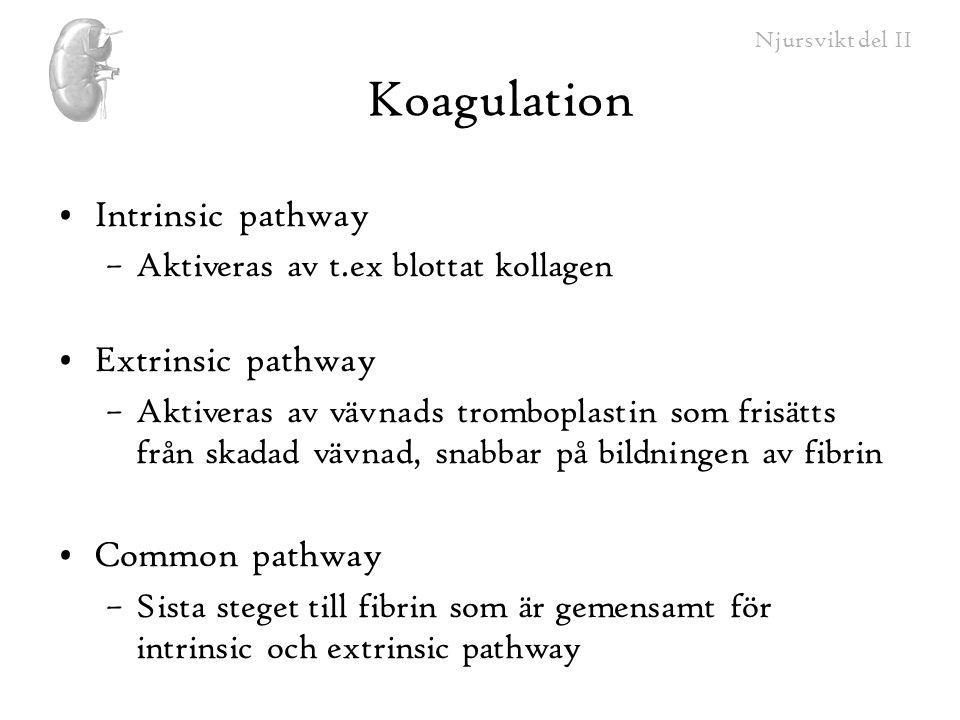 Koagulation Intrinsic pathway Extrinsic pathway Common pathway