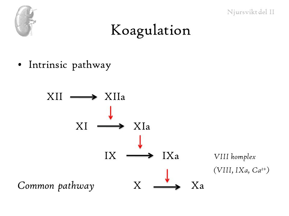 Koagulation Intrinsic pathway XII XIIa XI XIa