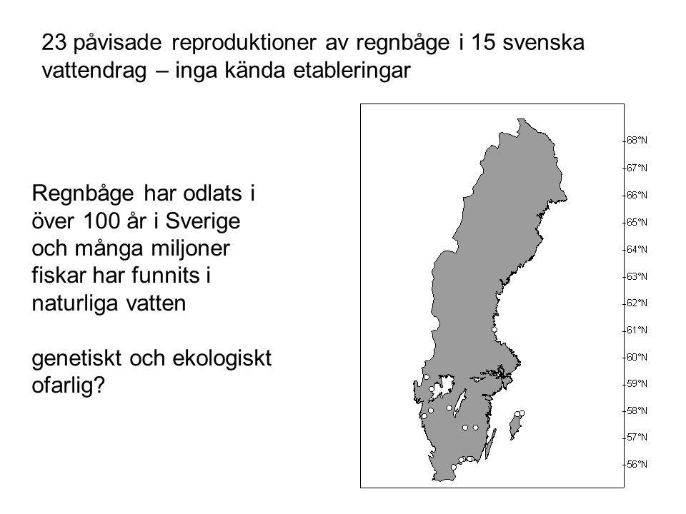 23 påvisade reproduktioner av regnbåge i 15 svenska vattendrag – inga kända etableringar