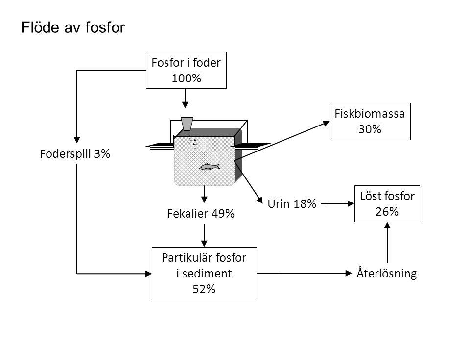 Flöde av fosfor Fosfor i foder 100% Fiskbiomassa 30% Foderspill 3%