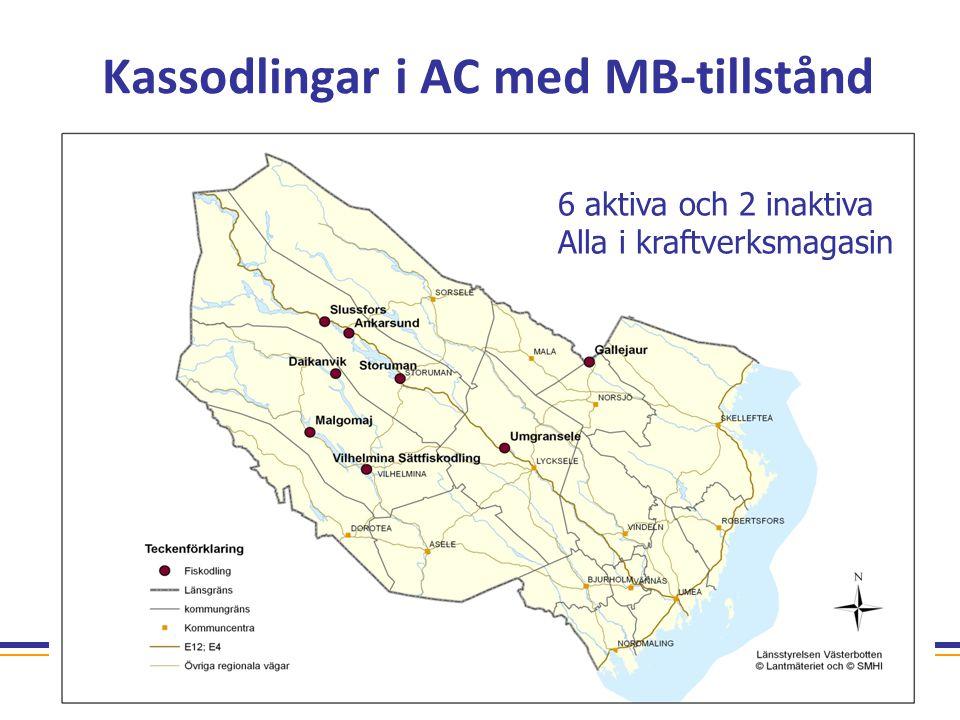 Kassodlingar i AC med MB-tillstånd