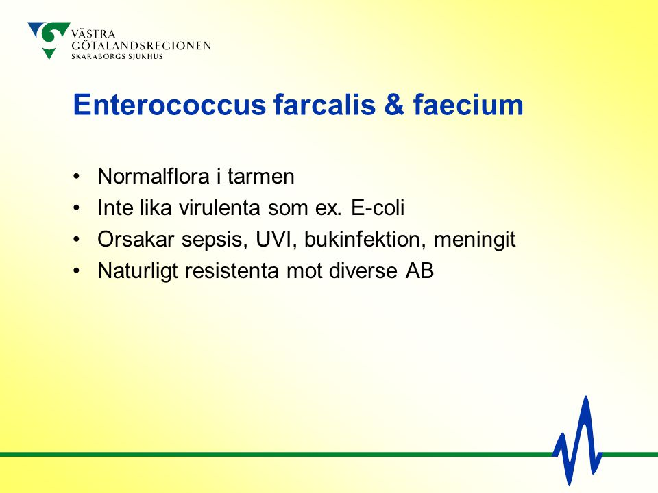 Enterococcus farcalis & faecium