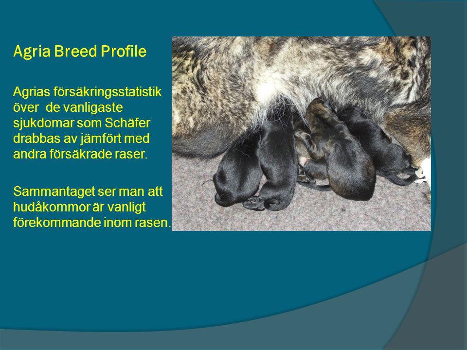 Agria Breed Profile Agrias försäkringsstatistik över de vanligaste sjukdomar som Schäfer drabbas av jämfört med andra försäkrade raser.