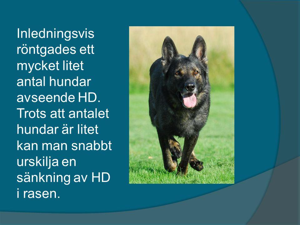 Inledningsvis röntgades ett mycket litet antal hundar avseende HD
