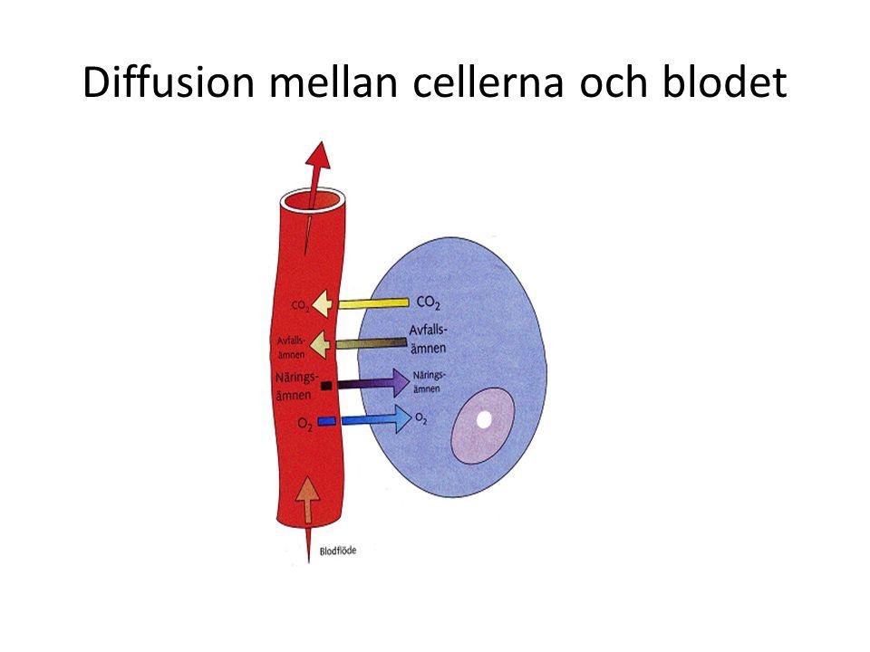 Diffusion mellan cellerna och blodet