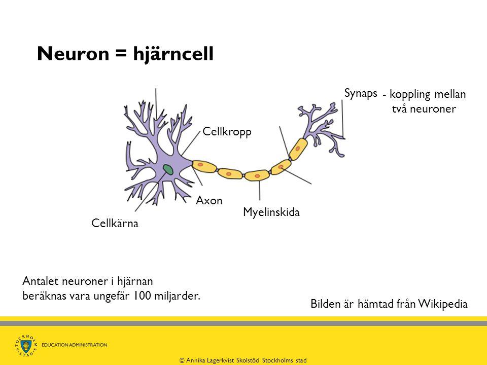 Neuron = hjärncell Synaps - koppling mellan två neuroner Cellkropp