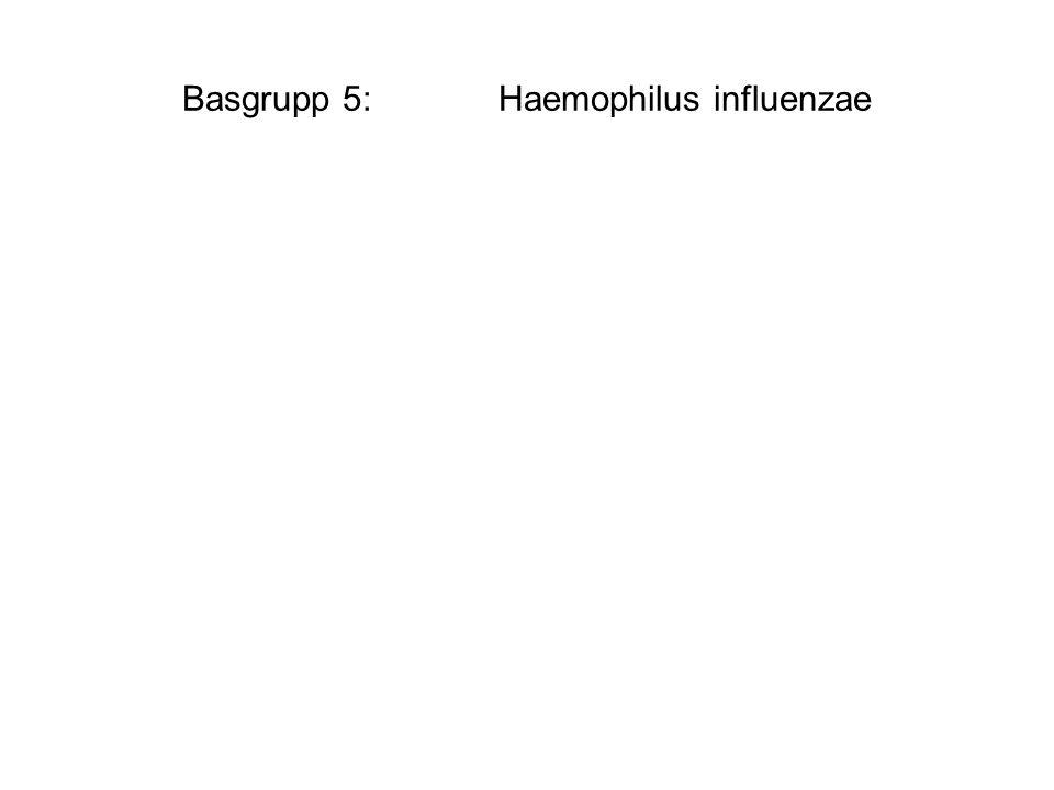 Basgrupp 5: Haemophilus influenzae