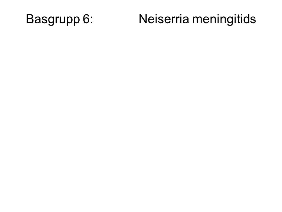 Basgrupp 6: Neiserria meningitids