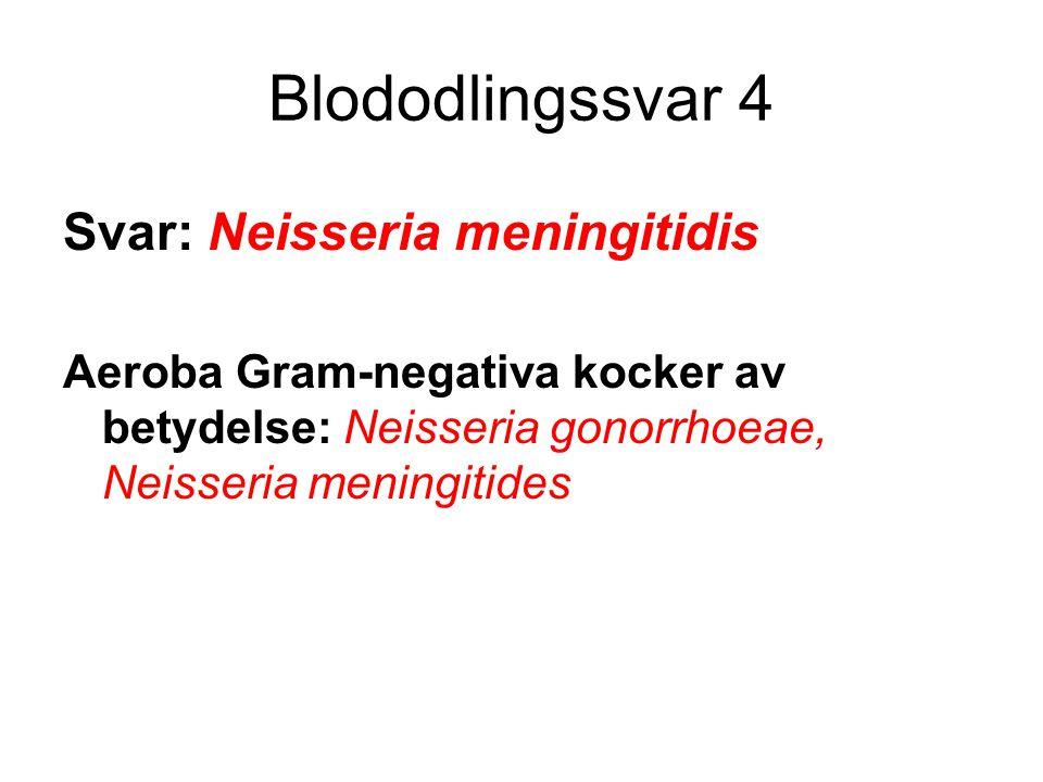 Blododlingssvar 4 Svar: Neisseria meningitidis