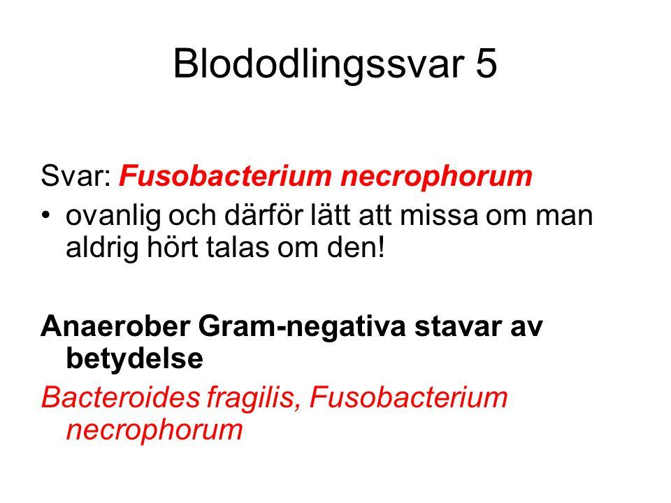 Blododlingssvar 5 Svar: Fusobacterium necrophorum