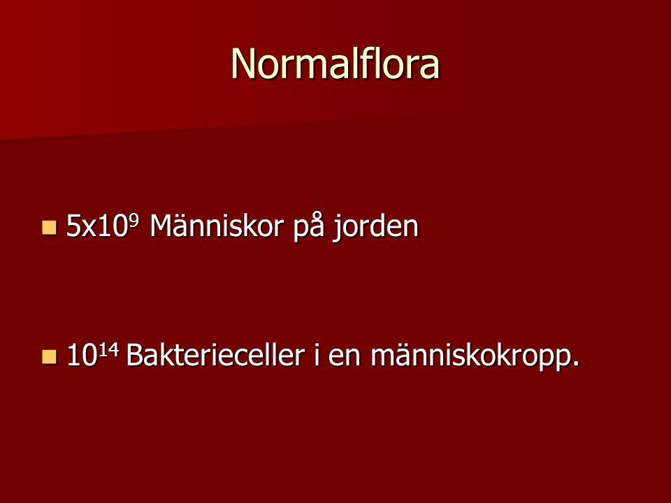 Normalflora 5x109 Människor på jorden