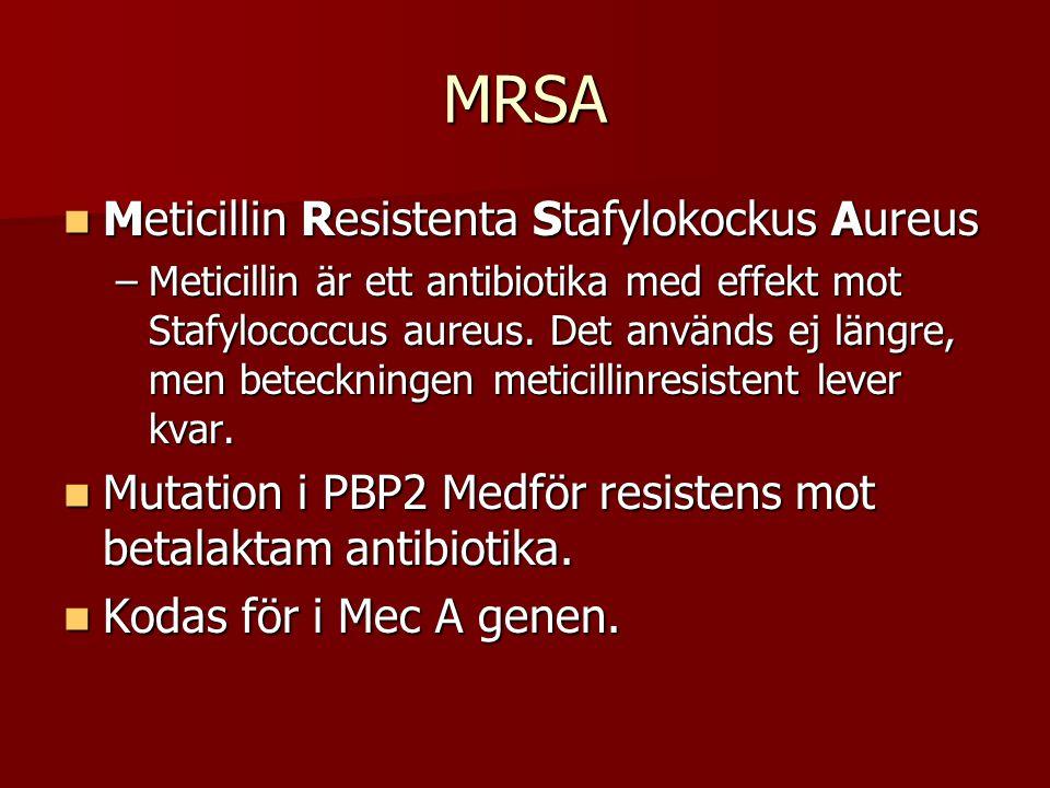 MRSA Meticillin Resistenta Stafylokockus Aureus