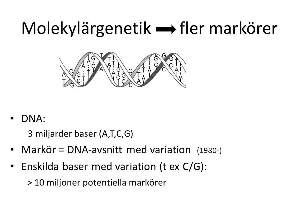Molekylärgenetik fler markörer