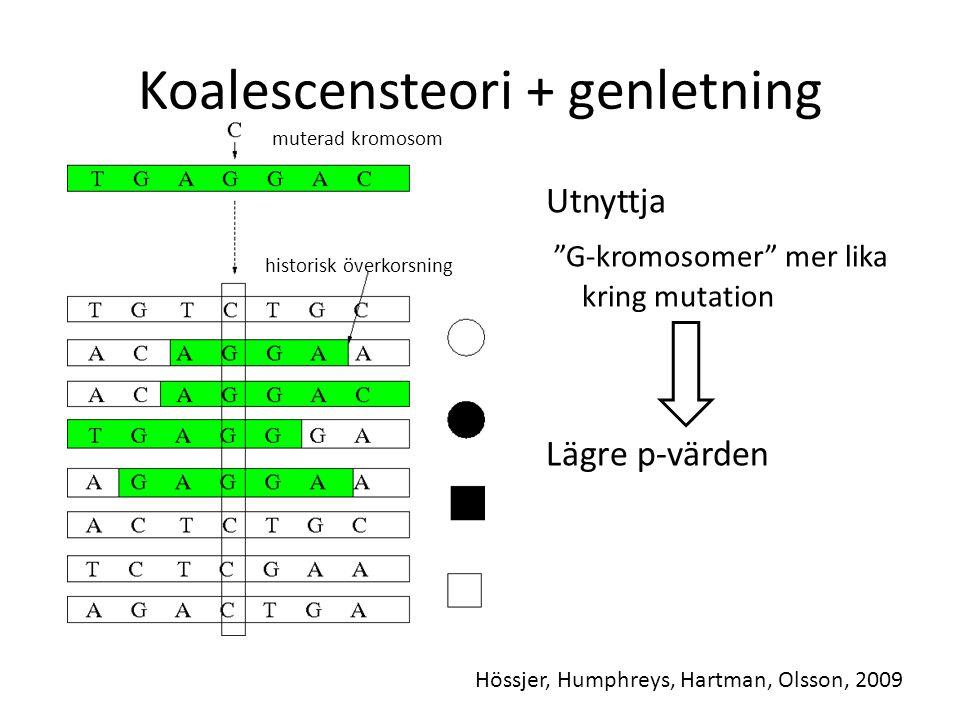 Koalescensteori + genletning