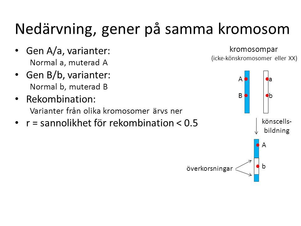 Nedärvning, gener på samma kromosom