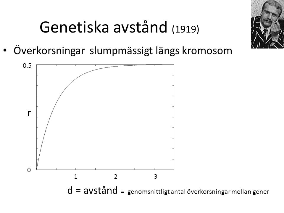 Genetiska avstånd (1919) Överkorsningar slumpmässigt längs kromosom r