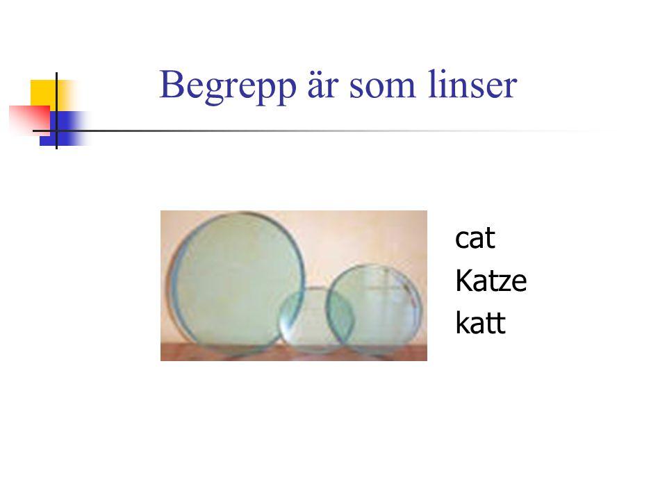 Begrepp är som linser cat Katze katt