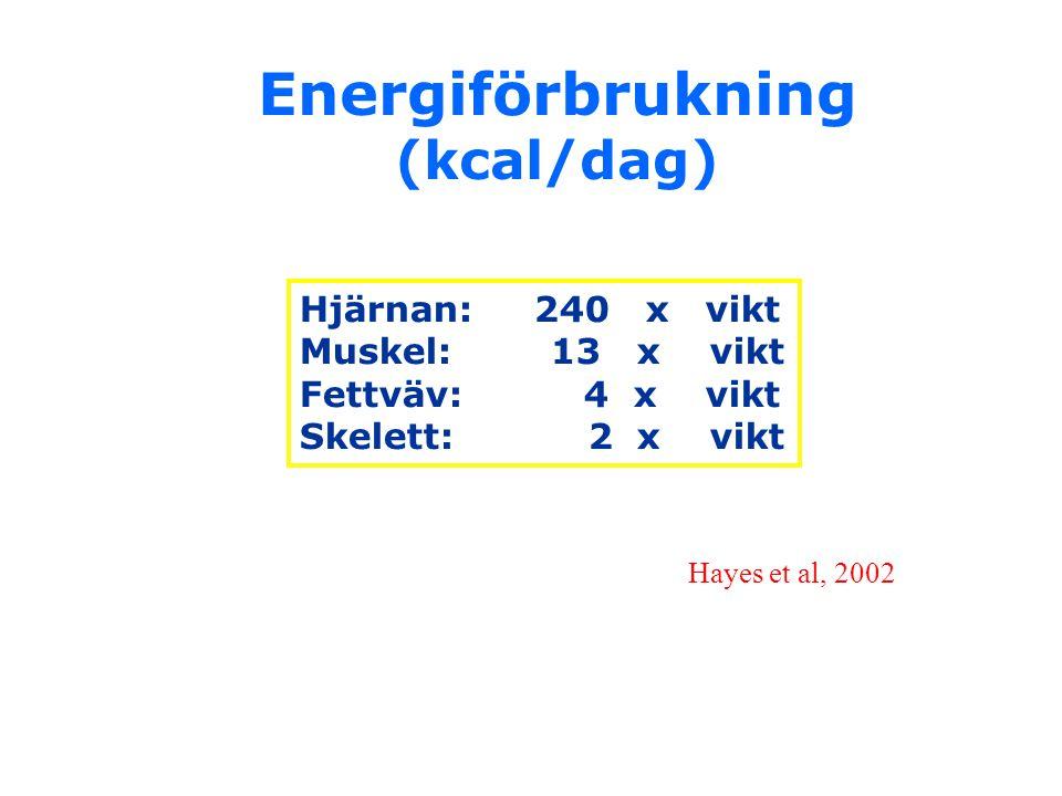 Energiförbrukning (kcal/dag)