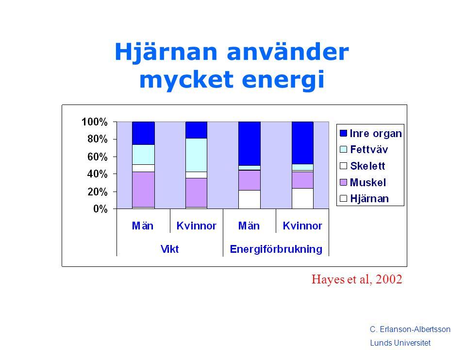 Hjärnan använder mycket energi