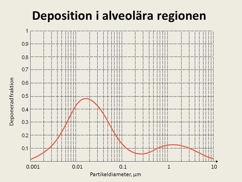 Deposition i alveolära regionen