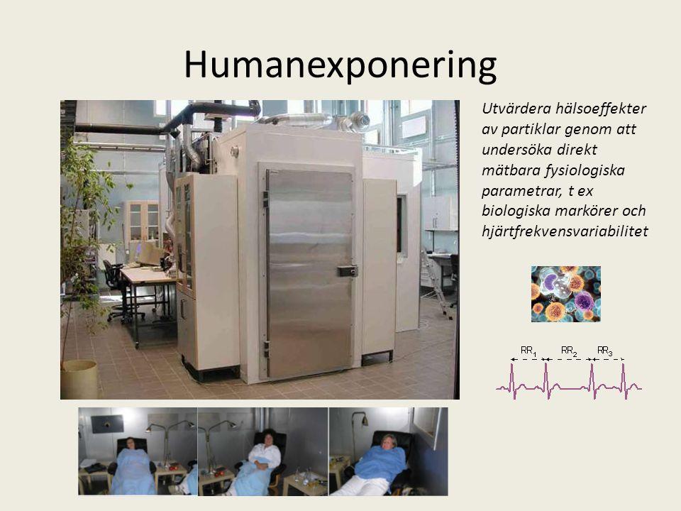 Humanexponering