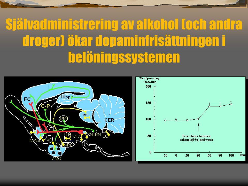 Självadministrering av alkohol (och andra droger) ökar dopaminfrisättningen i belöningssystemen