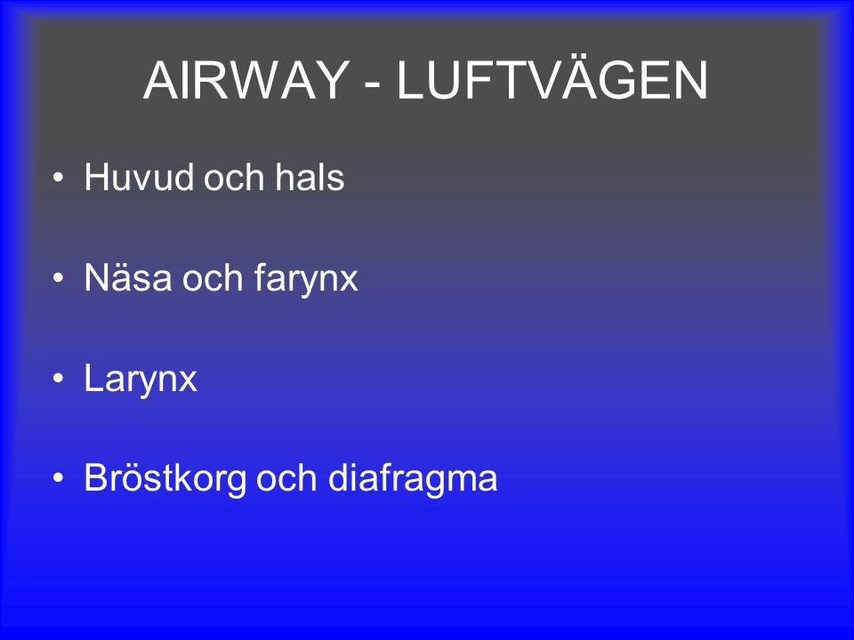 AIRWAY - LUFTVÄGEN Huvud och hals Näsa och farynx Larynx
