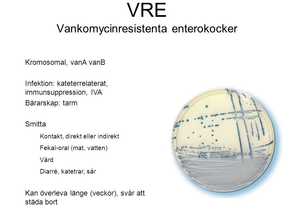 VRE Vankomycinresistenta enterokocker