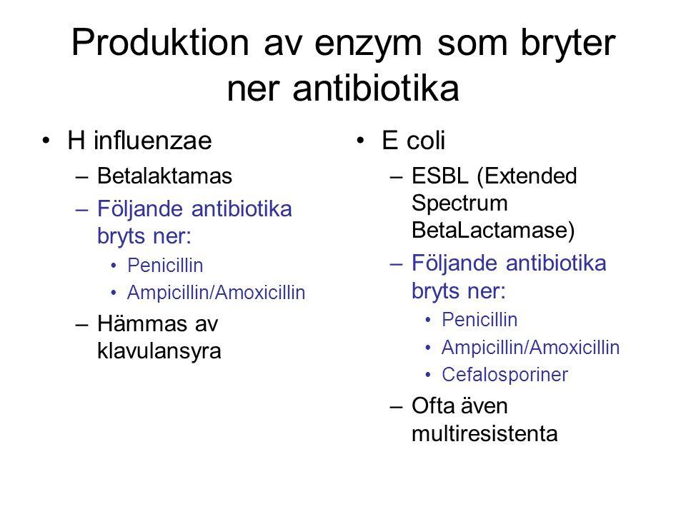 Produktion av enzym som bryter ner antibiotika