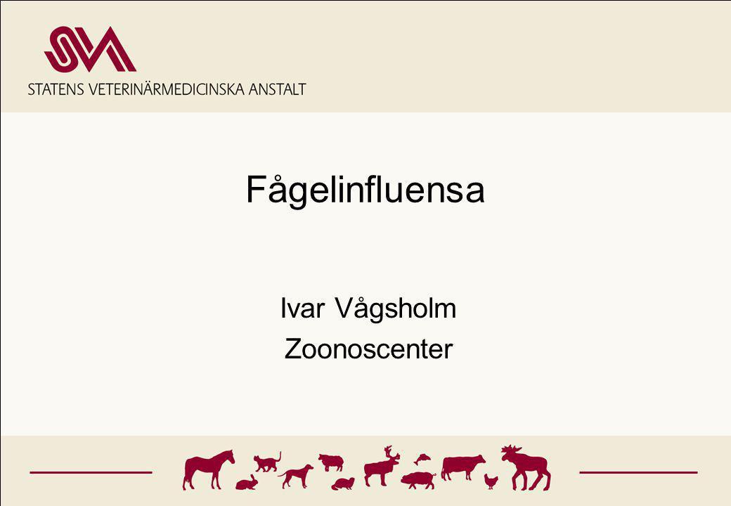 Ivar Vågsholm Zoonoscenter