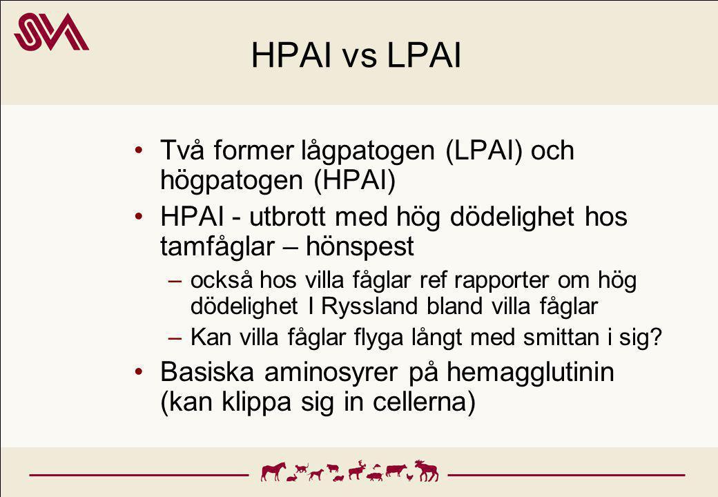 HPAI vs LPAI Två former lågpatogen (LPAI) och högpatogen (HPAI)