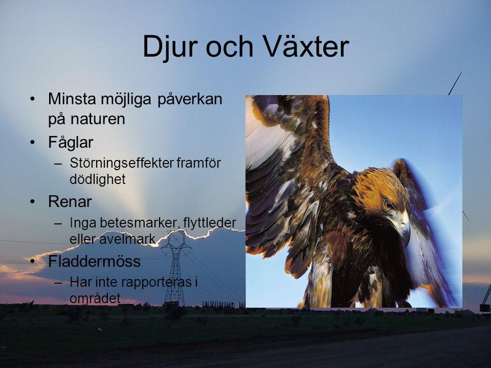 Djur och Växter Minsta möjliga påverkan på naturen Fåglar Renar