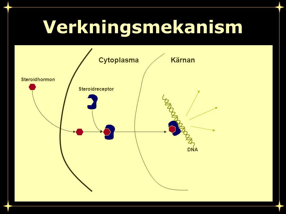Verkningsmekanism Cytoplasma Kärnan Steroidhormon Steroidreceptor DNA