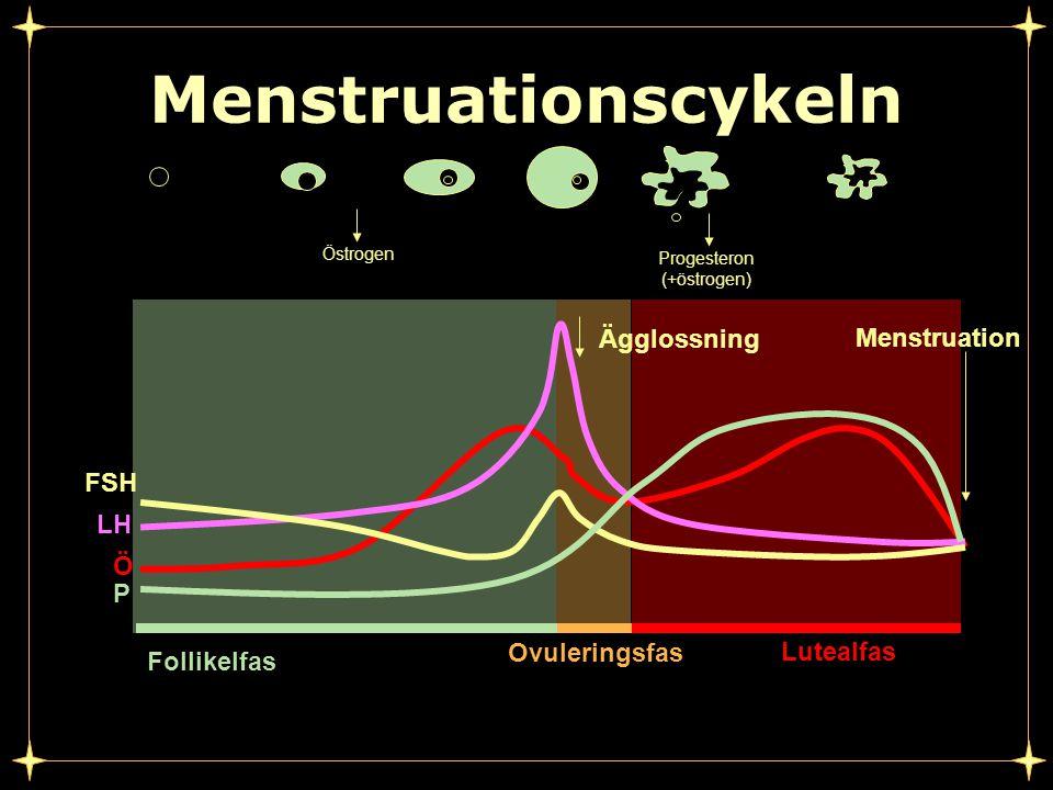 Progesteron (+östrogen)