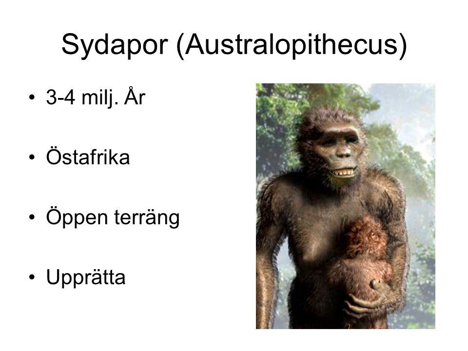 Sydapor (Australopithecus)