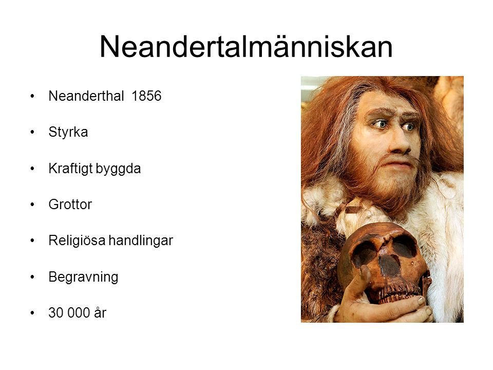 Neandertalmänniskan Neanderthal 1856 Styrka Kraftigt byggda Grottor