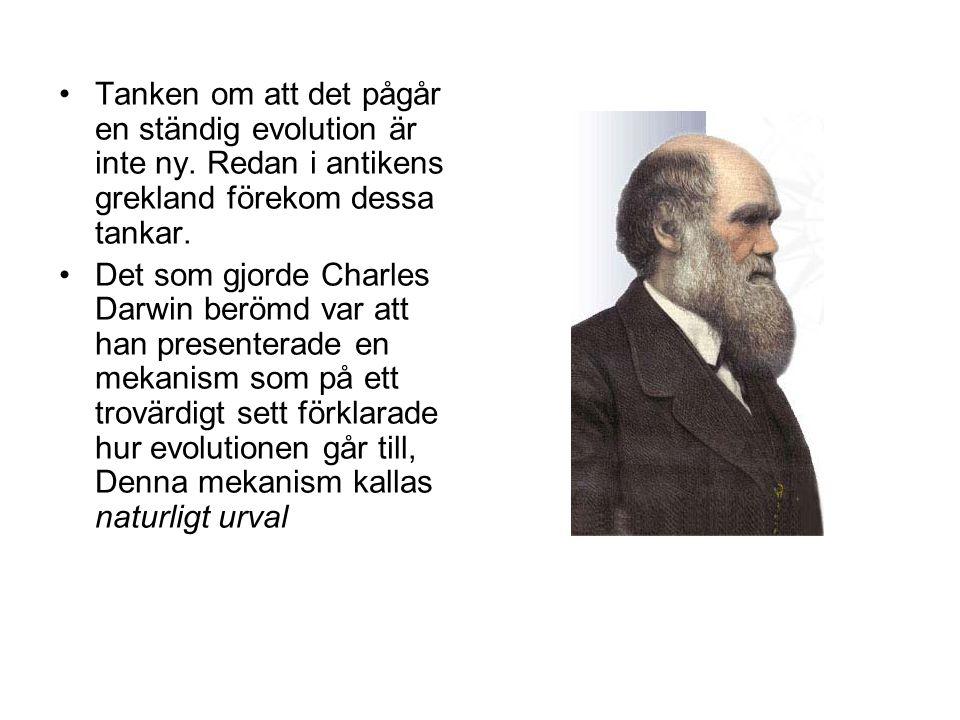 Tanken om att det pågår en ständig evolution är inte ny
