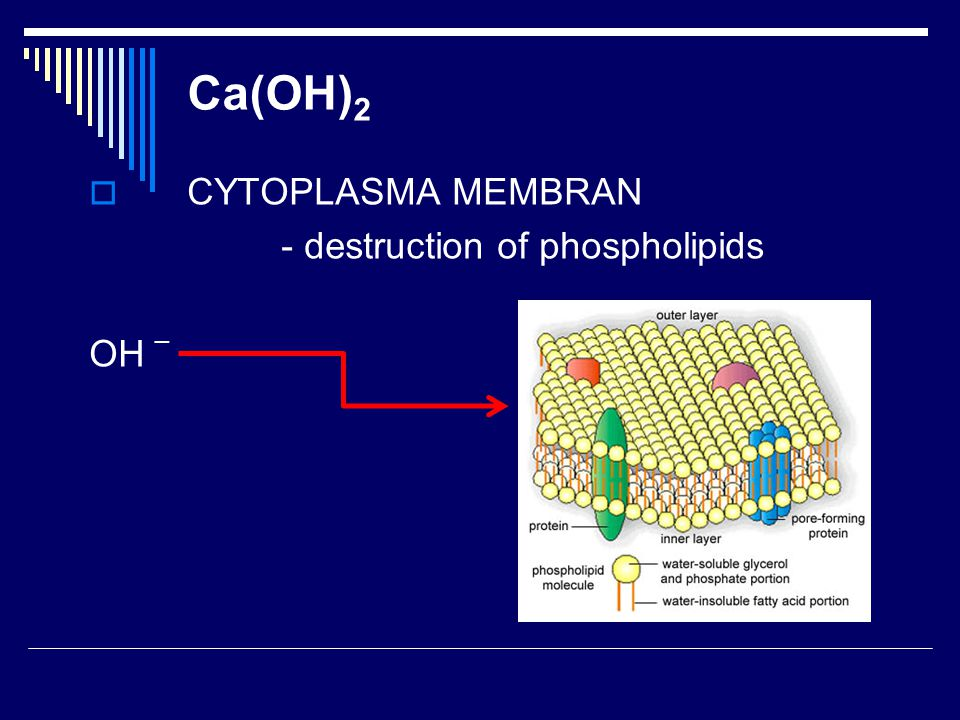 Ca(OH)2 CYTOPLASMA MEMBRAN - destruction of phospholipids OH _