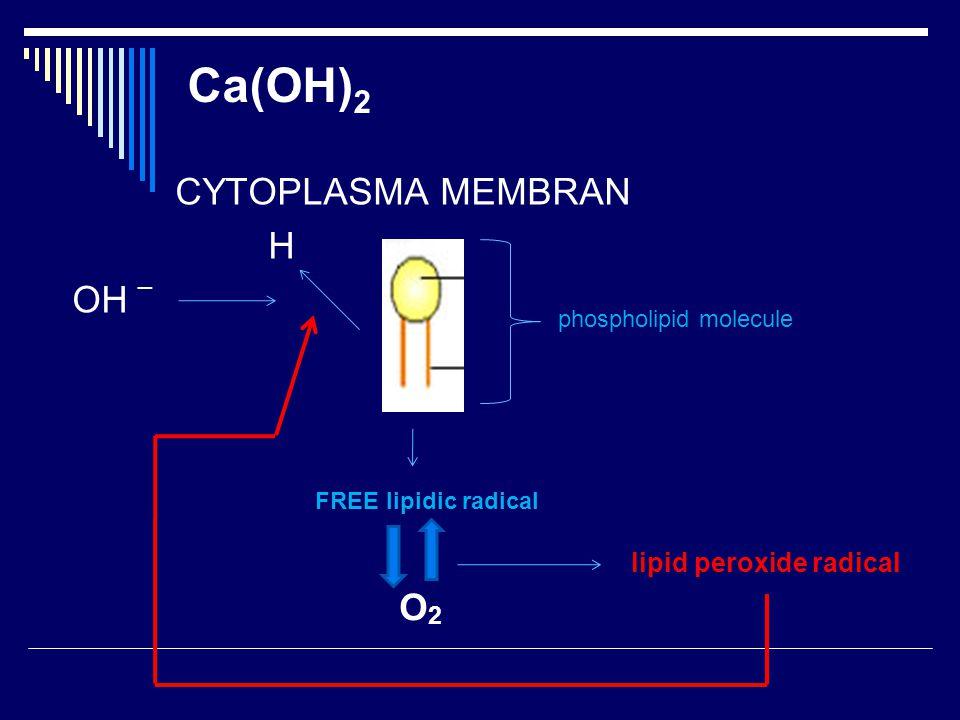 Ca(OH)2 CYTOPLASMA MEMBRAN H OH _ O2 lipid peroxide radical