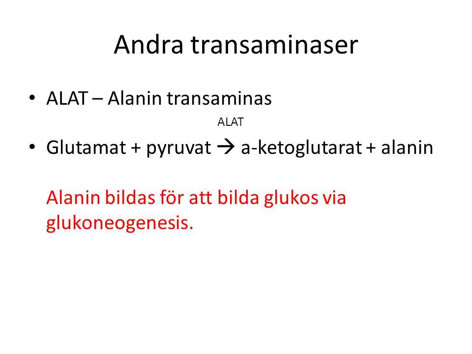 Andra transaminaser ALAT – Alanin transaminas