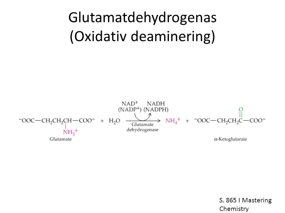 Glutamatdehydrogenas (Oxidativ deaminering)