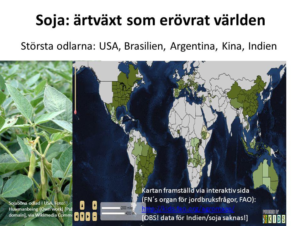 Soja: ärtväxt som erövrat världen