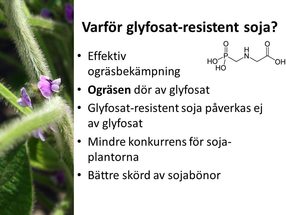 Varför glyfosat-resistent soja