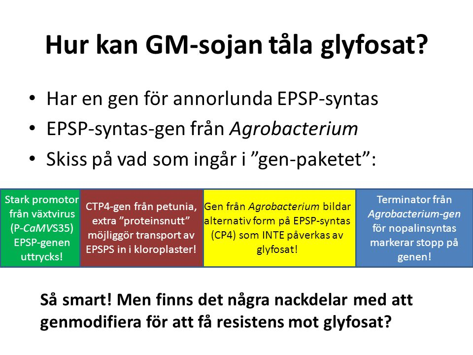 Hur kan GM-sojan tåla glyfosat
