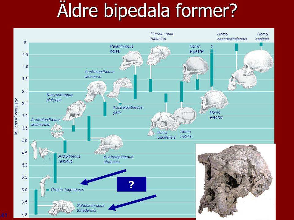 Äldre bipedala former Figure 34.41 Homo sapiens